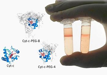 Processo alternativo purifica proteínas usadas como biossensores