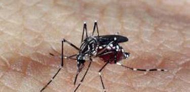 MG: 353 municípios em situação de alerta ou risco para dengue, zika e chikungunya